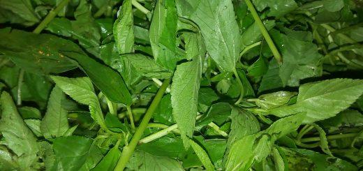 Health facts of Ewedu leafs