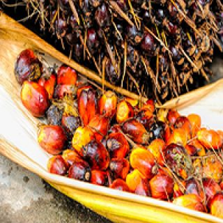 Red Palm Oil Benefits