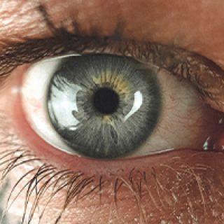 Moringa Benefits for Eyes