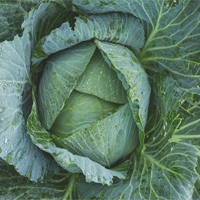 How To Eat Cabbage