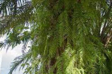 Fern onPalm TreeTrunk